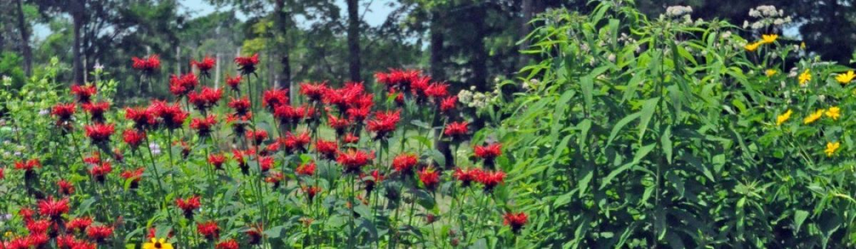 Transitioning Your Yard to Native Plants: How?